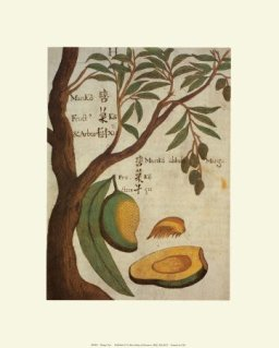 mango-tree-print-c10068822.jpeg